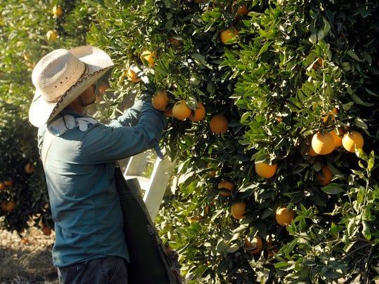 -1204_Oranges_1436.jpg_20131204.jpg