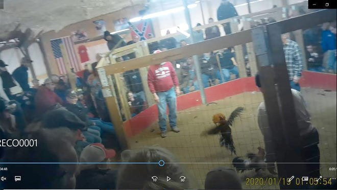 Screen captures from video of a recent Emanuel County cockfight show roosters fighting in an octagon while participants watch.