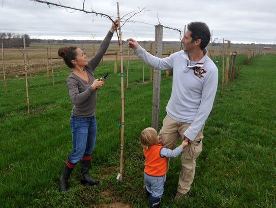 Katy Groves-Mussat trims grape vines while with her