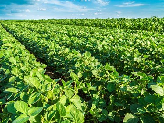 636124931191058810-soybean-field-ThinkstockPhotos-471229778.jpg