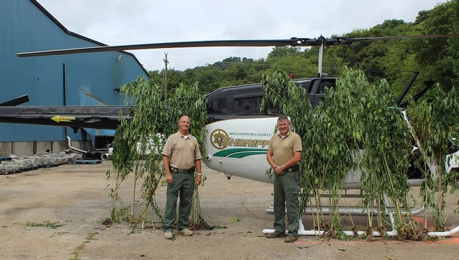 Williamson County Sheriff's Office Deputy Keith Chapman and Lt. Mark Elrod, both assigned to the aviation unit, stand near seized marijuana plants found in Arrington Aug 16, 2016.