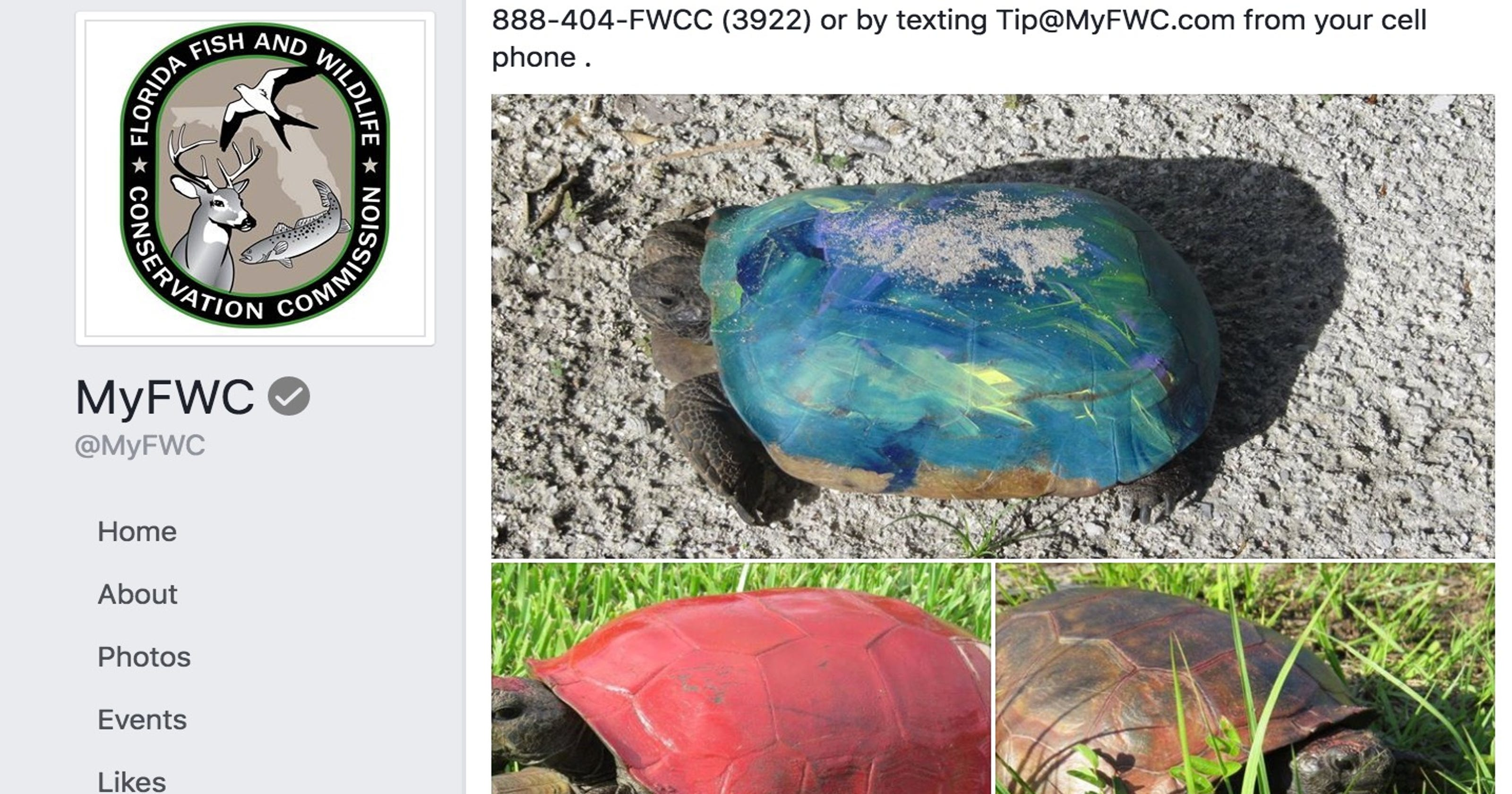 Wildlife officials: Seriously, stop painting turtle shells
