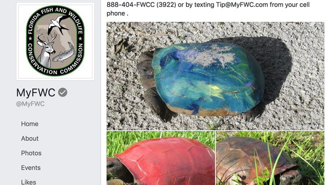 Wildlife officials posted a message on Facebook with photos of turtle and tortoise shells covered in paint. While people may think it's harmless fun to grab a turtle and paint its shell, the paint can have devastating effects on the turtles well-being, according to Florida Fish and Wildlife Conservation.