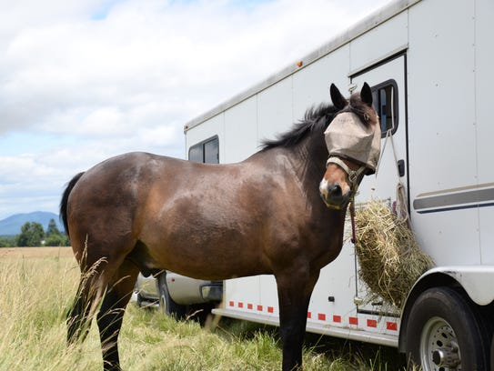 Bailey the horse stands by a trailer before the murder