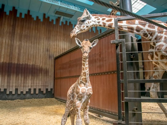 The Milwaukee County Zoo announced the birth of a male