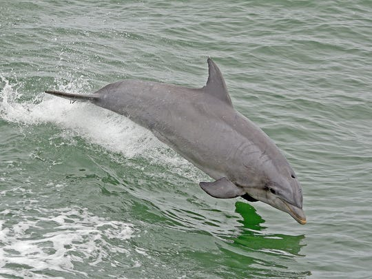 Scenes of a dolphin from the Cape May Whale Watcher.