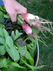 Radishes are among the top choices for early planting.