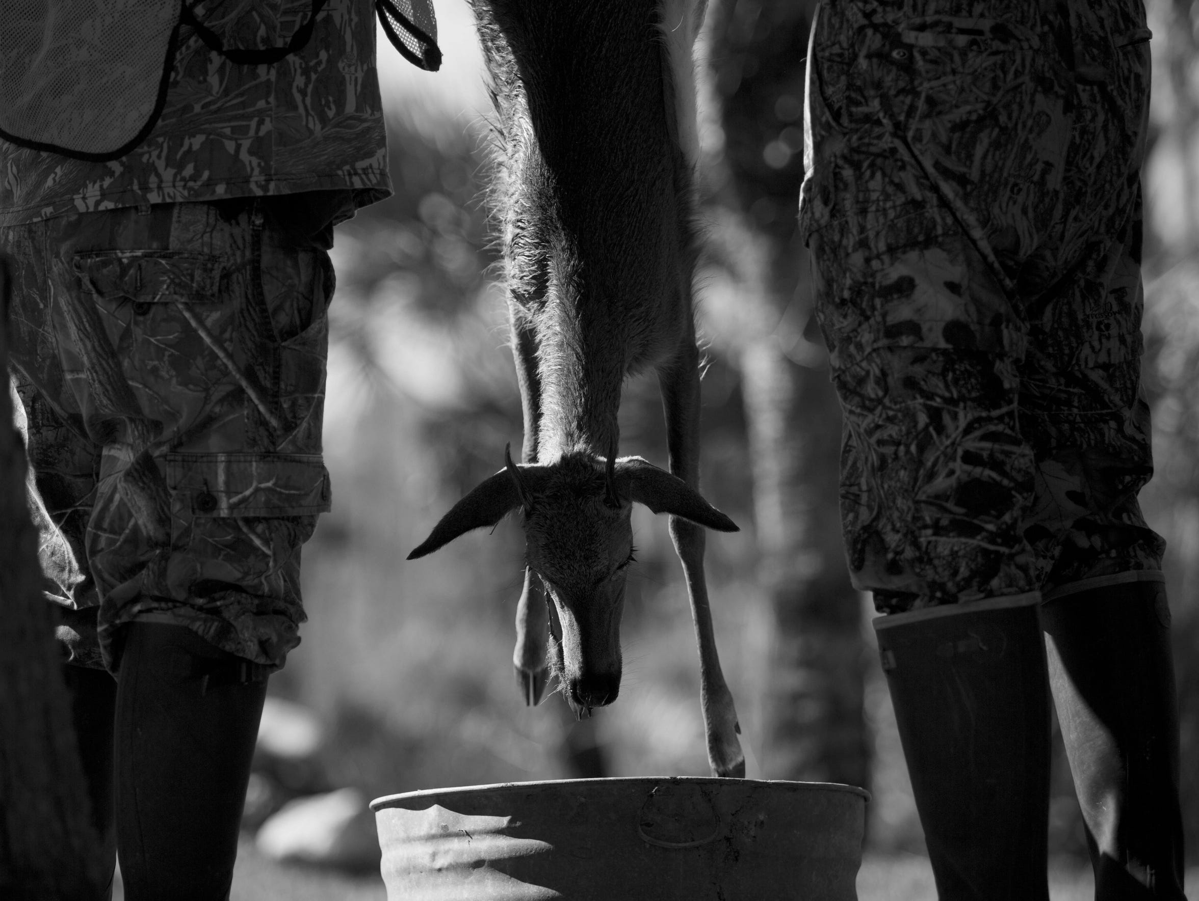 Deer hunting is a cultural focus point for many Gladesman.