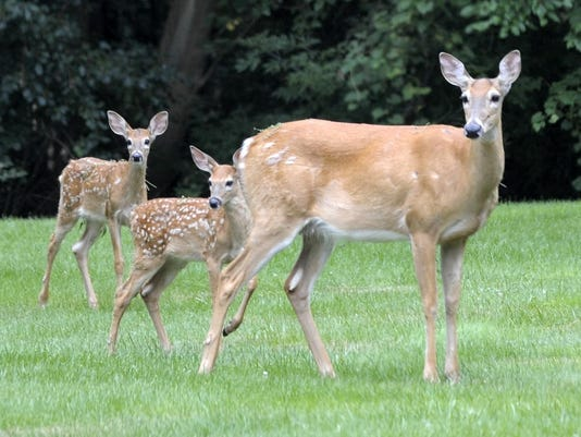 deer-franklin