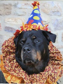 Benny_Rottie_Therapy