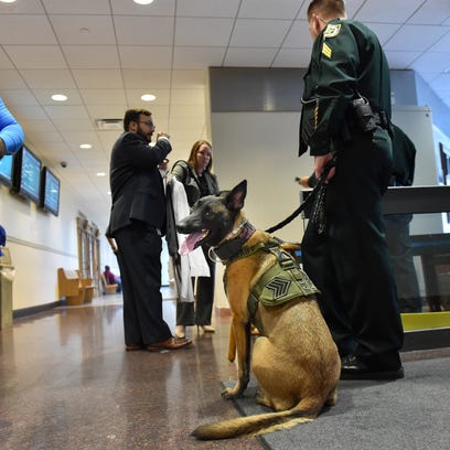 Kona (center), a 3-year-old Belgian Malinois and St.