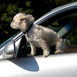 Pets and children need to stay cool as passengers in vehicles. Try not to leave animals or children in hot cars this summer, even for a short time, to avoid potentially fatal injuries.