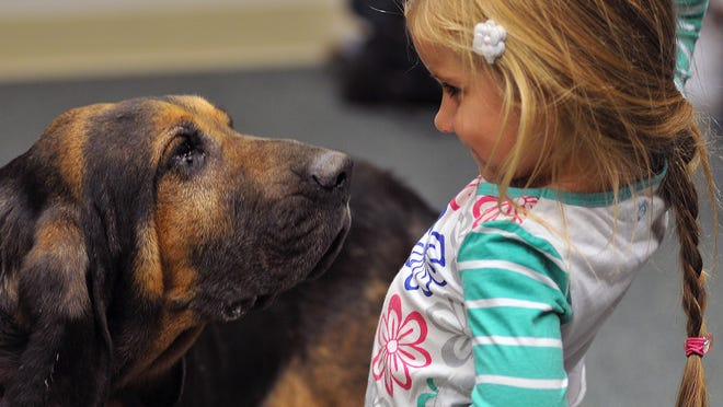 Ajax, a 10-year-old bloodhound from the Crawford County Sheriff's Office, gets up close with 4-year-old Ava Ogle of Galion during a demonstration at the Crestline Library.