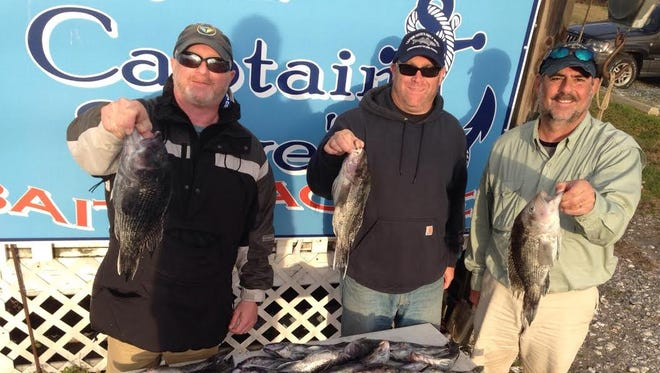 Greg Adelman, Evan Davis and Frank Hornig were successful offshore with a huge catch of fresh seabass.