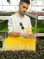 Joseph Martinez, co-owner of Arizona Microgreens, cuts