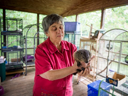 Wildlife rehabilitator Lynne McCoy holds a groundhog