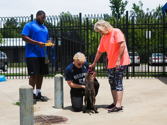 June 24, 2017 - Mikhail Hill (left), an offensive lineman for the University of Memphis, watches Frank and Brenda Carter pet a dog at Memphis Animal Services on Saturday. U of M's football offensive linemen were acting as adoption counselors at MAS.