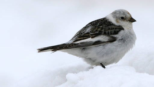 The first two Manitowoc County counts for the 116th annual Christmas bird counts have been completed, in the northwest and southwest parts of the county.