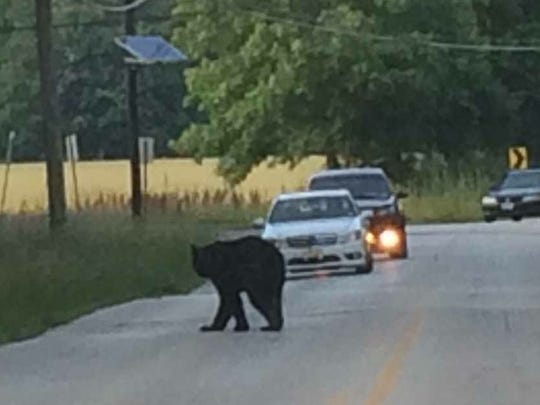 The bear stopped traffic Monday on Union Mill and Briggs roads in Mount Laurel.