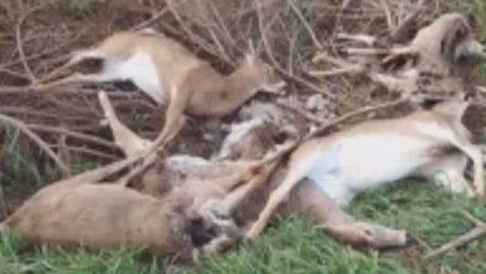 Deer found in Hart, Mich.