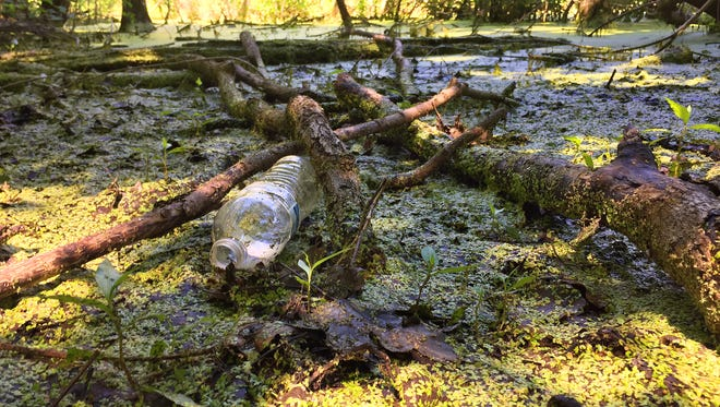 Standing water inside the Michaud-Sinninger Nature Preserve Tuesday, June 27, 2017, at Cumberland Park in West Lafayette. Standing water is prime breeding grounds for mosquitos.