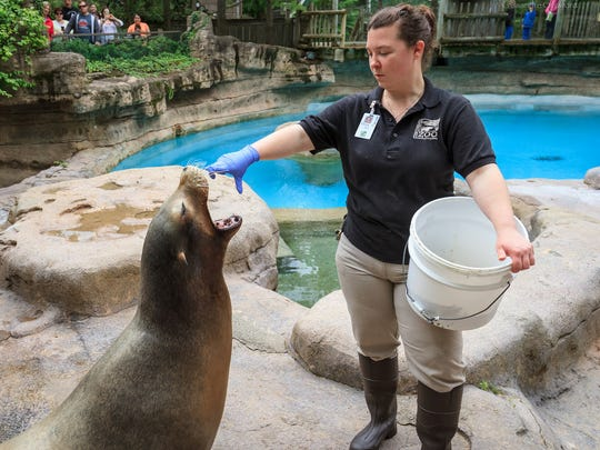 A zoo staff member feeds a seal.