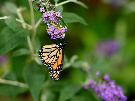 Roper Mountain Science Center, with nature trails and a butterfly garden, is a hidden gem on the Eastside.