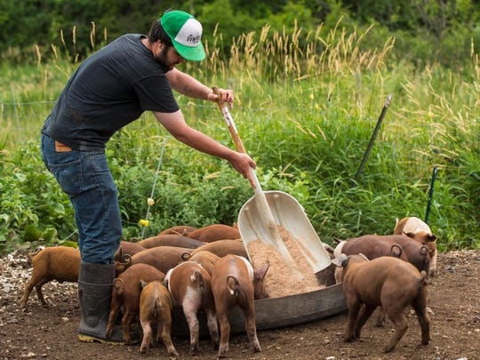 University of Vermont student Drew Anderson, seen feeding piglets on Friday, July 8, 2016, works as an intern at Agricola Farm in Panton.  His position is one of six internships funded by an anonymous donor through UVM.
