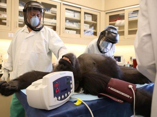 Ebola research