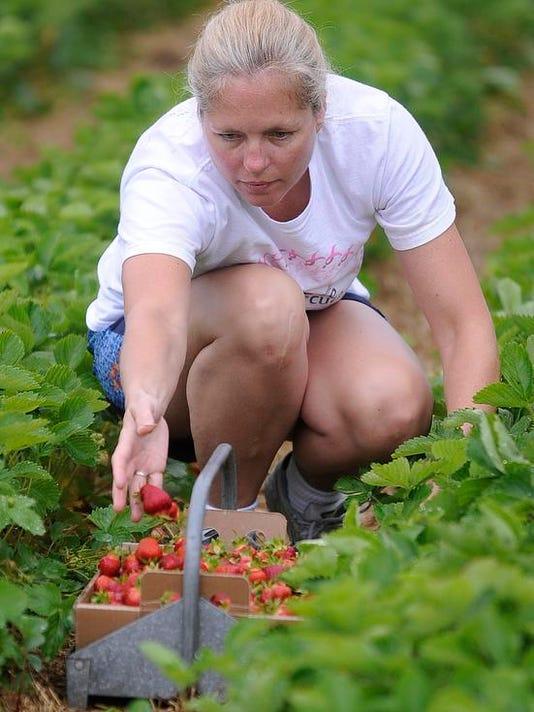 WDH 0620 Strawberry Season DP 001.jpg