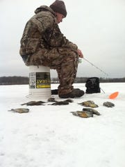 Cory Chard with some nice bluegills on jigs/waxies in 5-8 feet of water in the Hayward area