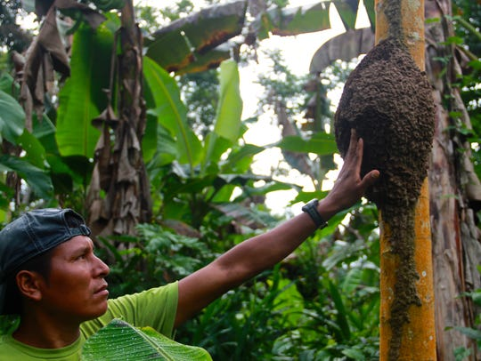 For indigenous tribes in Ecuador's Amazonia, nature