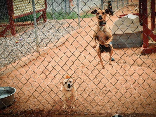 Nana, at left, and Auggie bounce at the sight of visitors at Safe Haven Animal Sanctuary on March 21.