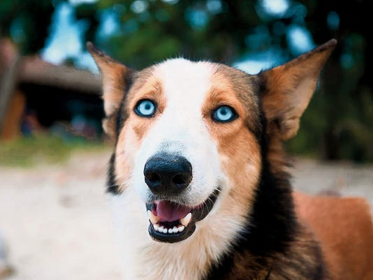 Knowing your dog's ancestry can help provide insight into care and medical issues.