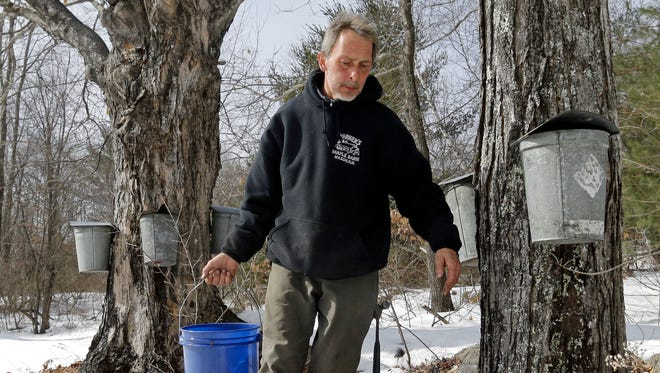 Parker's Maple Barn employee Jon Jonis carries maple tree sap he gathered from metal buckets, Tuesday, Feb. 21, 2017, in Brookline, N.H. Sen. Maggie Hassan, D-NH, led a discussion with maple syrup producers in New Hampshire about how climate change is impacting their industry. (AP Photo/Elise Amendola)