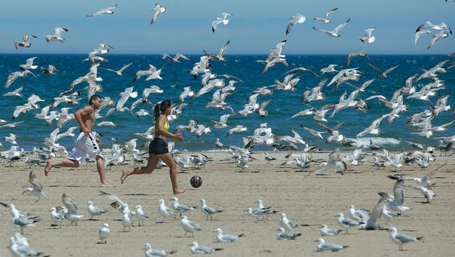 Left, Jomar Feliciano of Rochester and Vanesa Leiva of Penfield kick and chase a soccer ball surrounded by seagulls at Ontario Beach Park in Rochester, N.Y. on Friday June 6 2014.