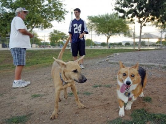 Surprise Community Park is Surprise's only dog park and includes drinking fountains for pooches and people, a half-acre of landscaping and trees, and shade structures for each of two sections.