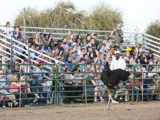 La gente disfruta del Festival de Avestruces en Tumbleweed