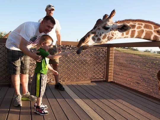 Matt Akins y Zachary Akins, de Goodyear, alimentan a una jirafa en el zoológico de Phoenix.
