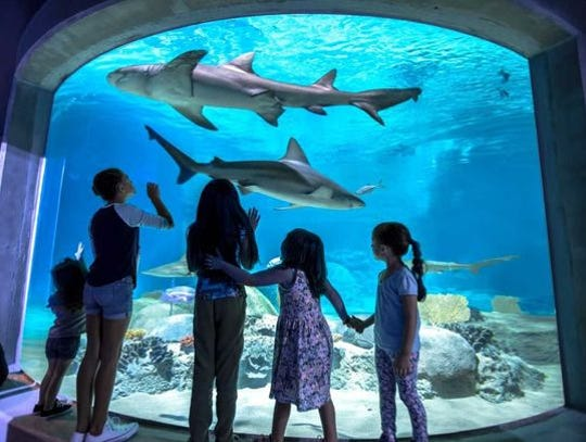 OdySea Aquarium comienza su mes de programación especial