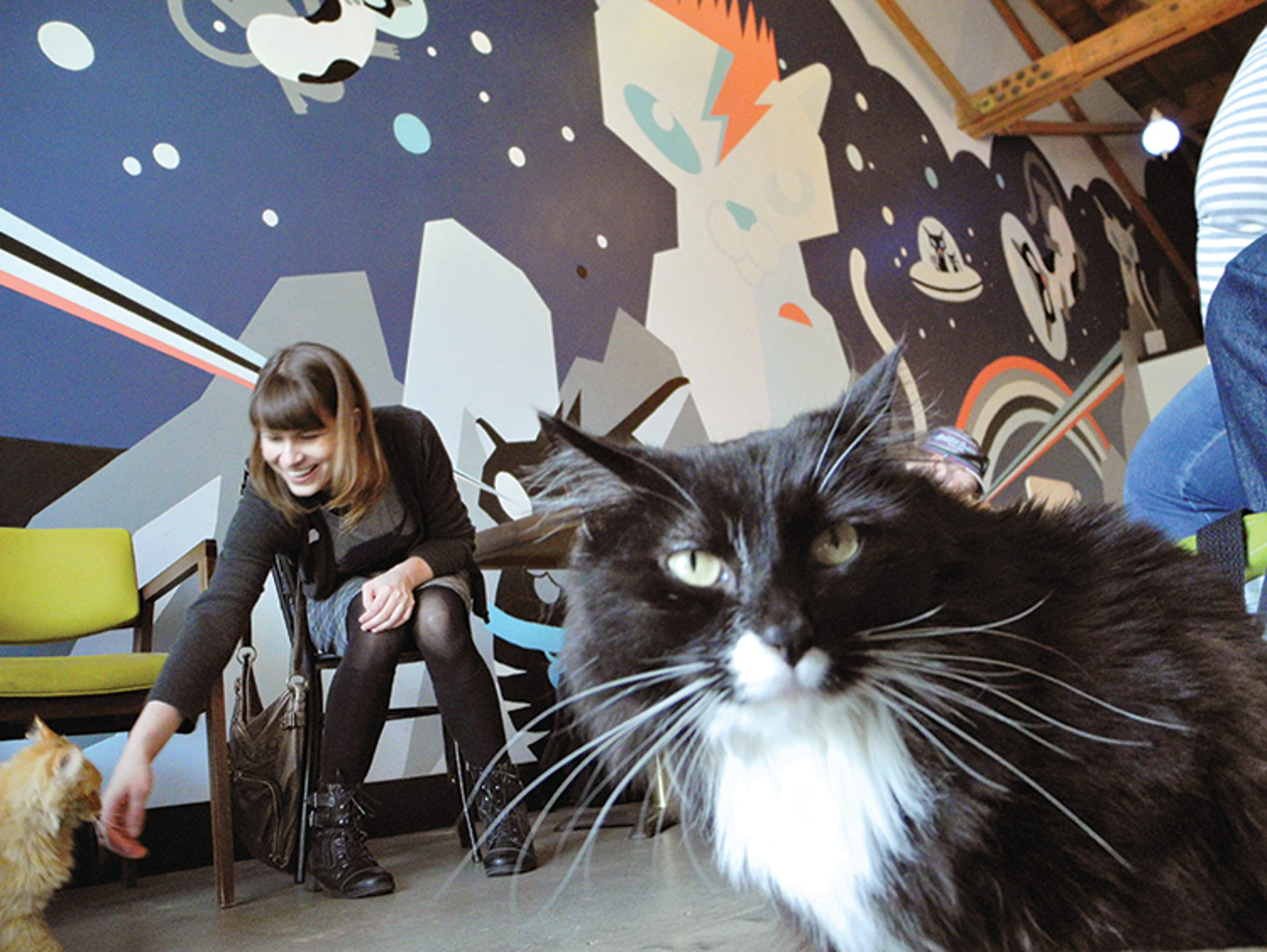 Purringtons Cat Lounge in Portland, Ore., offers beverages,