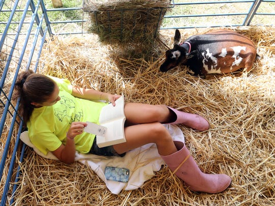 """Second day of Somerset County 4-H Fair held at North Brach Park in Bridgewater on Thursday August 11, 2016.Here Carol Ann Perry (left) sits and reads a book with her Nigerian Dwarf goat named """"Cokkie"""" prior to heading to the show ring to compete."""
