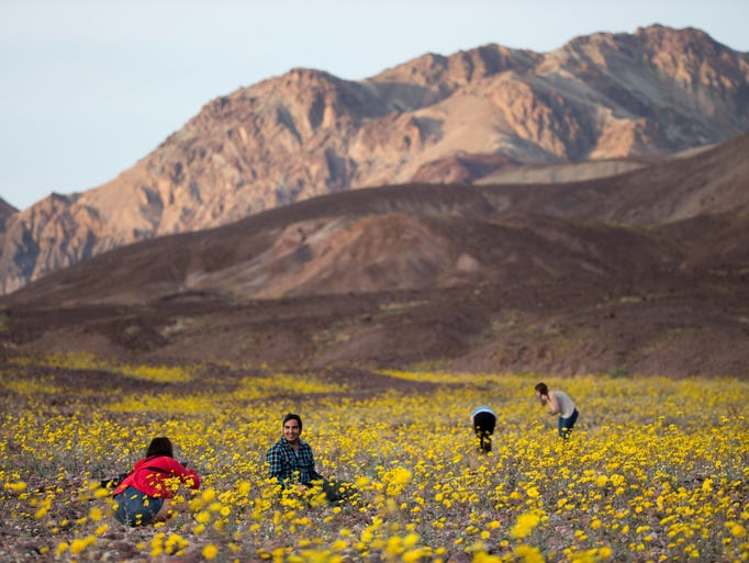 Tourists take pictures of wildflowers near Badwater