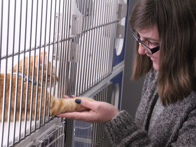 Jody Spraggins, 24, meets Lucy, a cat in the shelter