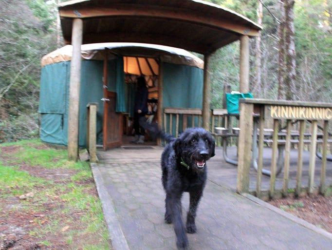 Yurts at Jessie M. Honeyman Memorial State Park have