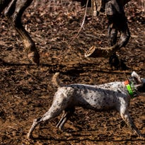 The Beifuss File: Bird dogs on point in national championships