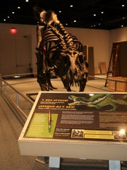A display board with facts about Stan accompanies the model of the Tyrannosaurus rex at the Farmington Museum at Gateway Park.