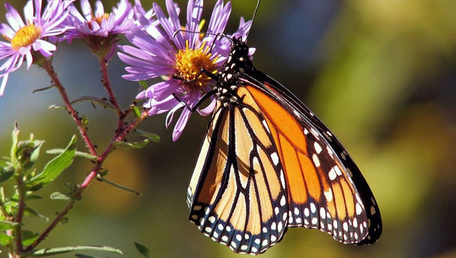 Now is the time to plant native seeds that pollinators can depend on for food and shelter next year.