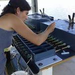 Photos: South American charru mussel
