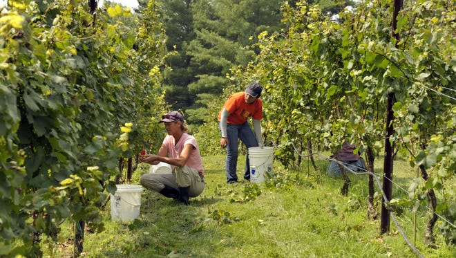 The McRitchie estate vineyards are farmed using sustainable methods on three discrete vineyard sites.